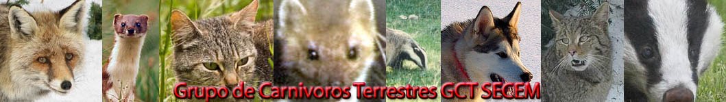 20101007224009-carnivoros.jpg