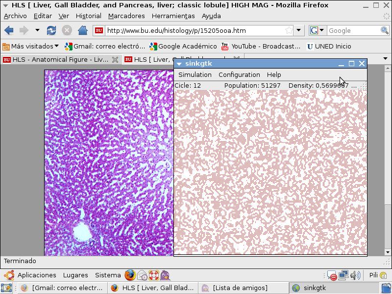 20090816202614-liver-tissue-modelling.png